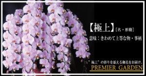 WEBでオススメの胡蝶蘭が買えるお店