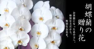 低価格・高品質の胡蝶蘭 プレミアガーデン