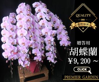 低価格高品質の胡蝶蘭 プレミアガーデン